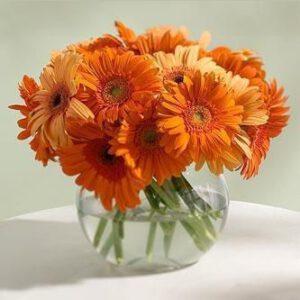 ดอกเดซี่สีส้ม
